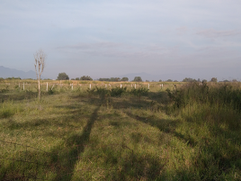 Foto de terreno industrial en venta en El Zapote Del Valle, Tlajomulco de Zúñiga, Jalisco, 21733179,  no 01
