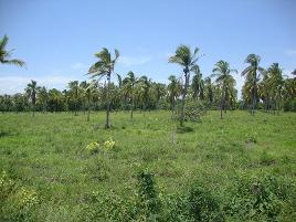 Foto de terreno industrial en venta en alto de ventura mpio. de sn marcos 0 637, san marcos, san marcos, guerrero, 8939971 No. 01