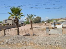 Foto de terreno comercial en renta en avenida del ciruelo , granjas santa cecilia, mexicali, baja california, 17406944 No. 01