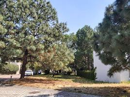 Foto de terreno habitacional en venta en avenida del reno poniente 4700 26, bugambilias, zapopan, jalisco, 0 No. 01