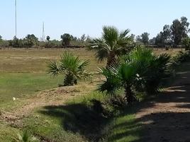 Foto de rancho en venta en boulevard hector terán final 2000, lázaro cárdenas la 28, mexicali, baja california, 16671118 No. 02