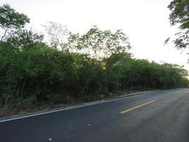Foto de terreno habitacional en venta en cacalchen whi9650, cacalchen, cacalchén, yucatán, 0 No. 01