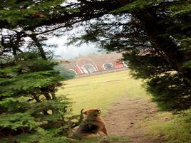 Foto de rancho en venta en camino al panteón , santo tomas ajusco, tlalpan, df / cdmx, 14769696 No. 01