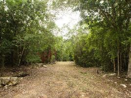 Foto de terreno habitacional en venta en camino de acceso del grupo conquistador , francisco uh-may, tulum, quintana roo, 0 No. 01