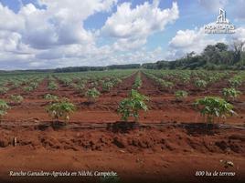 Foto de rancho en venta en  , campeche 1, campeche, campeche, 16540277 No. 01