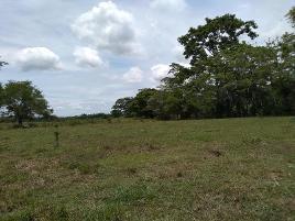 Foto de terreno comercial en venta en carretera a teapa kilometro 23 23, la lima, centro, tabasco, 8669602 No. 01