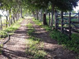 Foto de rancho en venta en carretera escárcega - chetumal , 10 de mayo, escárcega, campeche, 0 No. 01