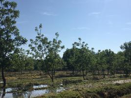 Foto de terreno comercial en venta en carretera mezquital kilometro 15 , felipe ángeles, durango, durango, 0 No. 02
