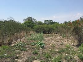 Foto de terreno comercial en venta en carretera panamericana tuxtla - aeropuerto llano san juan , santa inés, berriozábal, chiapas, 14208830 No. 01