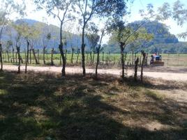 Foto de rancho en venta en carretera teapa-jalapa , mariano matamoros, teapa, tabasco, 0 No. 01