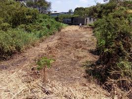 Foto de terreno comercial en venta en cedro del ejido, saloya 2da sección. , nacajuca, nacajuca, tabasco, 0 No. 01