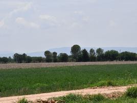 Foto de rancho en venta en  , ciudad manuel doblado centro, manuel doblado, guanajuato, 0 No. 01