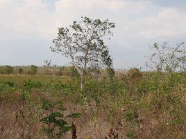 Foto de rancho en venta en Altavista, Campeche, Campeche, 16777261,  no 01