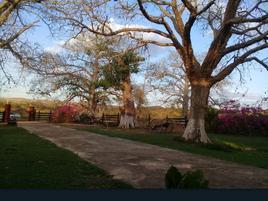 Foto de rancho en venta en dzinup , dzitnup, hecelchakán, campeche, 17792622 No. 01