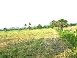 Foto de rancho en venta en  , el paraíso, huimanguillo, tabasco, 0 No. 01