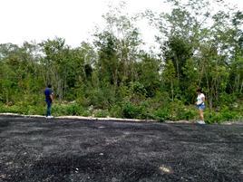 Foto de terreno comercial en venta en el pedregal 2, el pedregal, solidaridad, quintana roo, 0 No. 01