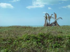 Foto de terreno habitacional en venta en  , la playa, champotón, campeche, 0 No. 01