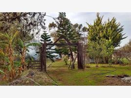 Foto de rancho en venta en  , la salina, ensenada, baja california, 17739740 No. 02
