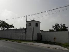 Foto de terreno habitacional en renta en  , playa norte, carmen, campeche, 11782376 No. 01