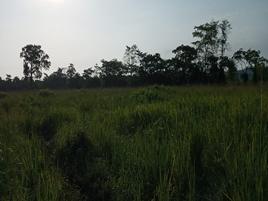 Foto de rancho en venta en puyacatengo sur, jalapa , guanal 2a sección, jalapa, tabasco, 0 No. 01
