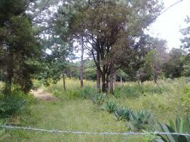 Foto de terreno comercial en venta en rosario zontewitz campo grande , teopisca, teopisca, chiapas, 14209003 No. 01