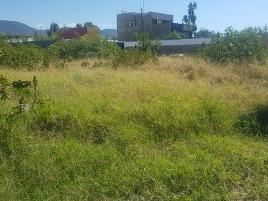 Foto de terreno habitacional en renta en sabinos sin número , xoxocotlan, santa cruz xoxocotlán, oaxaca, 11035764 No. 01