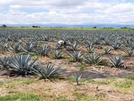 Foto de rancho en venta en  , venustiano carranza, venustiano carranza, michoacán de ocampo, 17908344 No. 01
