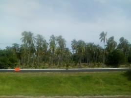 Foto de terreno industrial en venta en viaducto diamante 1049, tres palos, coahuayutla de josé maría izazaga, guerrero, 9286690 No. 01