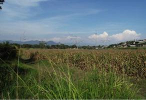 Foto de terreno habitacional en venta en - 0, centro, yautepec, morelos, 15862538 No. 01