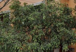 Foto de casa en venta en Lomas del Chamizal, Cuajimalpa de Morelos, DF / CDMX, 20532344,  no 01