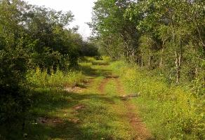 Foto de terreno industrial en venta en 100 206, komchen, mérida, yucatán, 9235277 No. 01