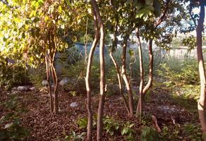 Foto de terreno habitacional en venta en 16 , merida centro, mérida, yucatán, 0 No. 01