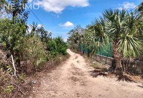 Foto de terreno habitacional en venta en 293 1019, leona vicario, felipe carrillo puerto, quintana roo, 20767703 No. 01