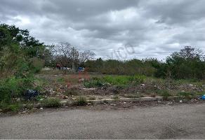 Foto de terreno habitacional en venta en 31 816, caucel, mérida, yucatán, 12384811 No. 01