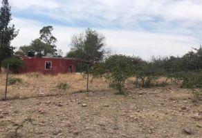 Foto de terreno habitacional en venta en La Trinidad, Guanajuato, Guanajuato, 20911464,  no 01