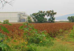 Foto de terreno habitacional en venta en Balcones de Zamora, Zamora, Michoacán de Ocampo, 20190718,  no 01