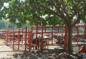 Foto de rancho en venta en Tehuixtla, Jojutla, Morelos, 14821712,  no 01
