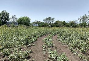 Foto de terreno comercial en venta en Montemorelos Centro, Montemorelos, Nuevo León, 15736018,  no 01