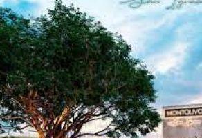 Foto de terreno habitacional en venta en San Ignacio, Progreso, Yucatán, 20629883,  no 01