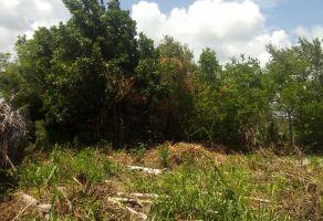 Foto de terreno habitacional en venta en Mahahual, Othón P. Blanco, Quintana Roo, 20604981,  no 01