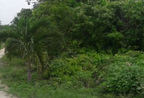 Foto de terreno habitacional en venta en Del Bosque, Benito Juárez, Quintana Roo, 15149054,  no 01