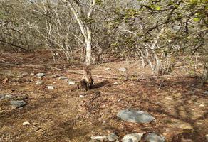 Foto de terreno habitacional en venta en 97452 , tixkuncheil, baca, yucatán, 0 No. 01