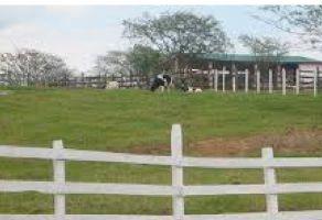 Foto de rancho en venta en Agua Zarca, Hueytamalco, Puebla, 13202956,  no 01