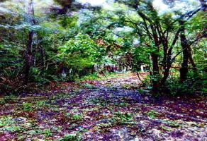 Foto de terreno habitacional en venta en a 1 kilometro de la carretera federal tulum - playa del carmen a tan solo 10 min de tulum , tulum centro, tulum, quintana roo, 0 No. 01