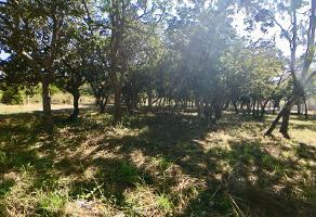 Foto de terreno habitacional en venta en a 500 mts de la carretera ***, copoya, tuxtla gutiérrez, chiapas, 0 No. 01