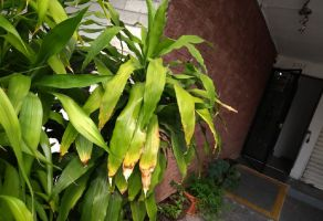 Foto de casa en renta en Arboledas 1a Secc, Zapopan, Jalisco, 15411332,  no 01