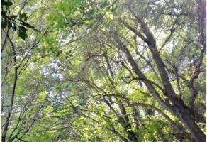Foto de departamento en venta en ahuehuetes norte , bosque de las lomas, miguel hidalgo, df / cdmx, 0 No. 01