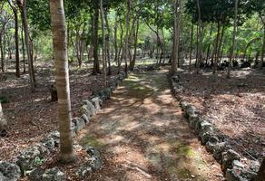 Foto de terreno habitacional en venta en alamos s/n , alfredo v bonfil, benito juárez, quintana roo, 0 No. 01