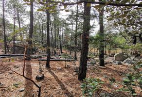 Foto de terreno habitacional en venta en alazan , otinapa, durango, durango, 0 No. 01