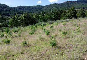 Foto de terreno habitacional en venta en  , aquixtla, aquixtla, puebla, 0 No. 01